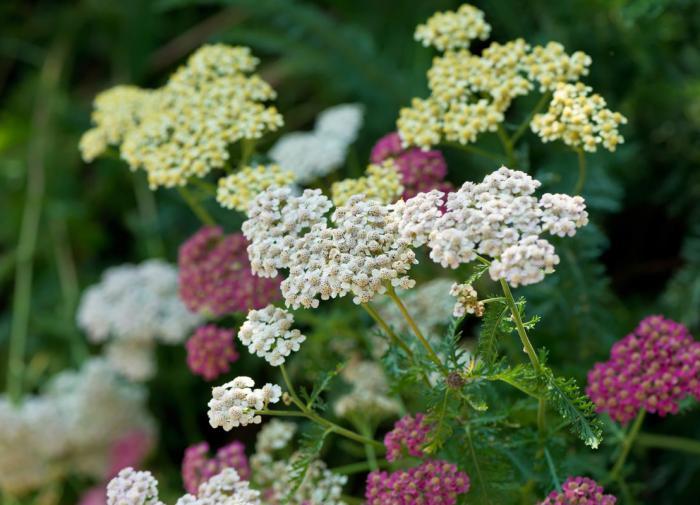 Франция поддерживает действия пакистанских властей в борьбе с