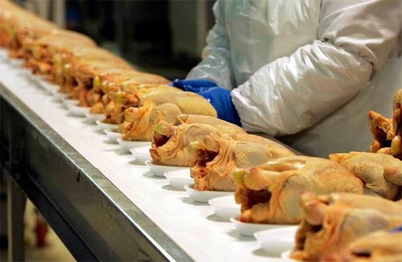Россия запретила ввоз мяса птицы из США. Куры из США больше не попадут в Россию