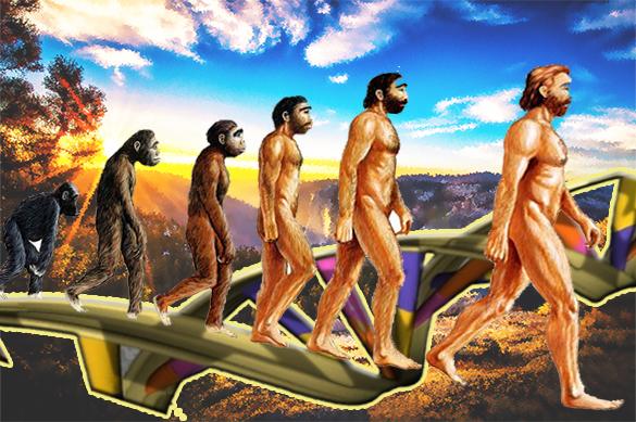 """В том, что обезьяна обрела разум и превратилась в человека, """"виноваты"""" гены. 377707.jpeg"""