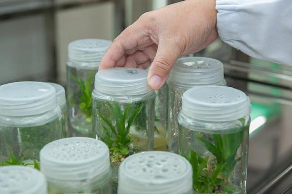 Ученые усовершенствовали фотосинтез и ускорили рост урожая. 396707.jpeg