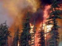 Алтайские лесники справились с пожаром площадью более 10 га