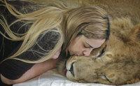 В Бразилии спасают парализованного льва (+фото). lion