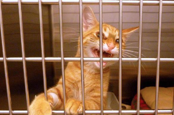 Гости плакали: на провинциальную выставку привезли замученных котят. 384709.jpeg