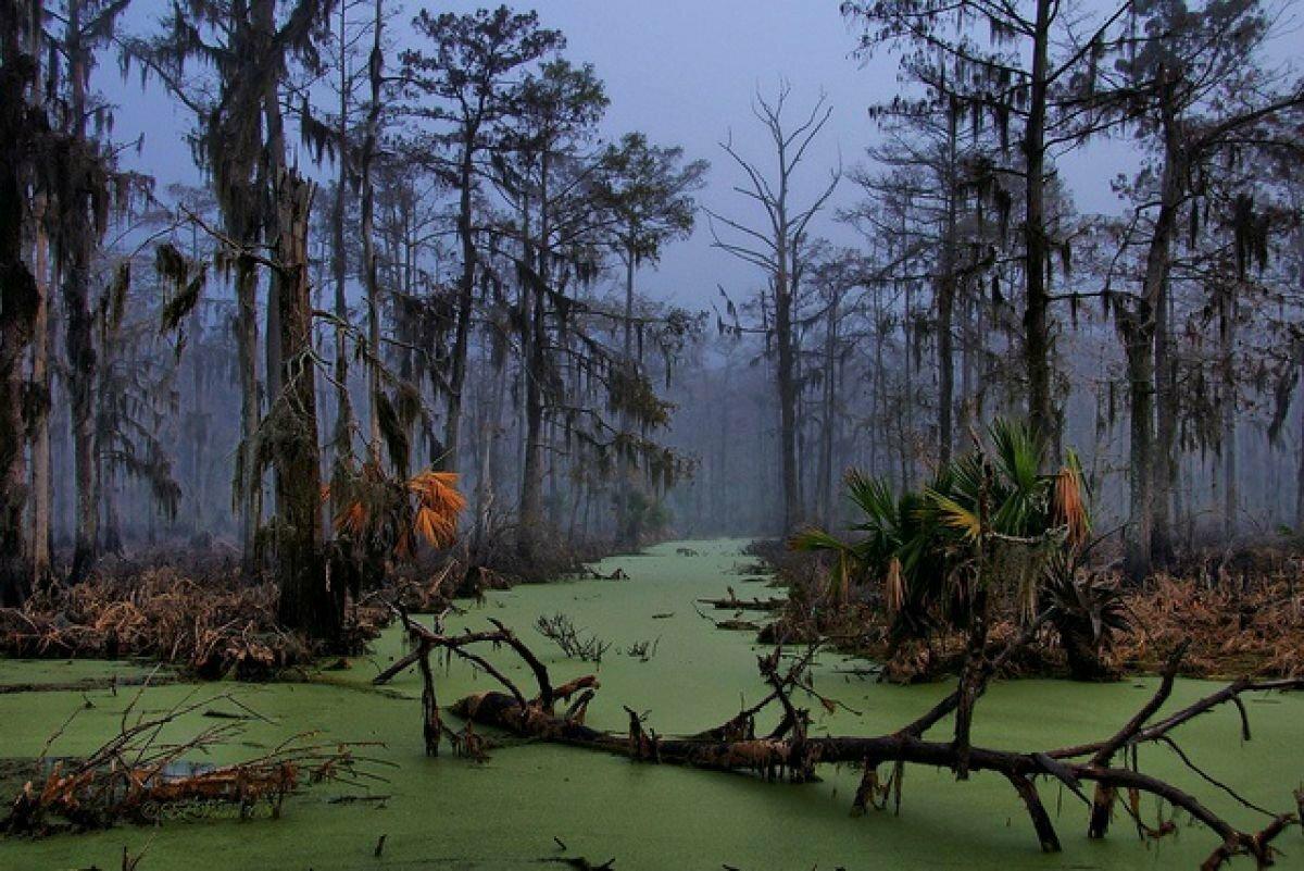 Пять самых жутких мест на планете. Болота Манчак (штат Луизиана, США)