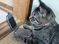 Новгородская кошка попалась на