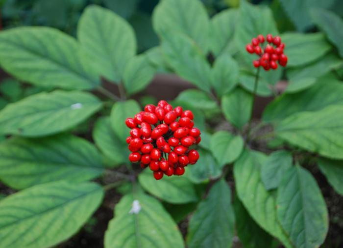 Директор аэропорта Домодедово уходит с поста