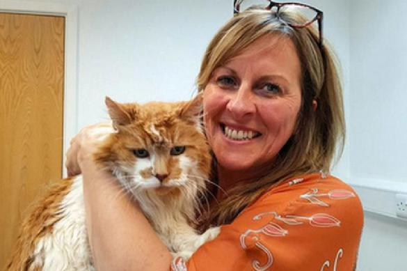 Выяснено: как кошки могут прожить до 30 лет. 387711.jpeg