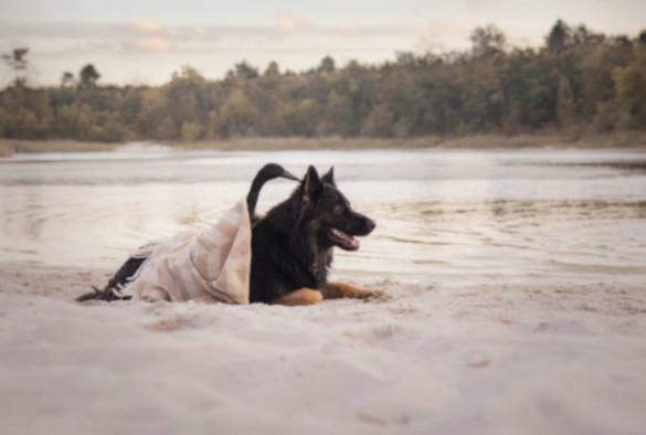 История удивительной дружбы между собакой и уткой. 394711.jpeg