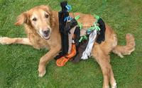 Собака наелась одежды, достаточной для заполнения стиральной