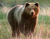 В Сибири медведь напал на лагерь и задрал геолога. 270713.jpeg