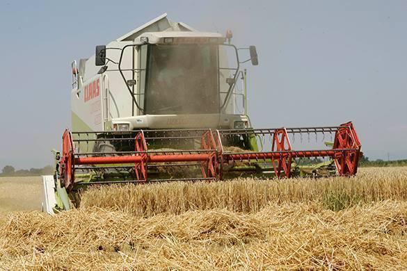 Российские аграрии почти полностью обеспечивают страну продуктами. комбайн в поле
