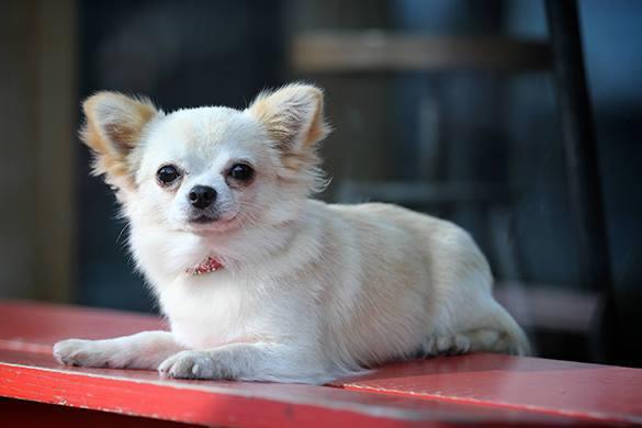 Московские собаки получат свои пляжи