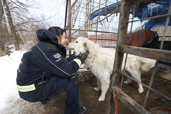 В США 46 собак спасли от хозяина-живодера. 312717.jpeg
