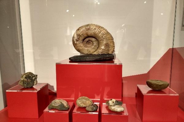 Когда оживает история: музей археологии на курорте