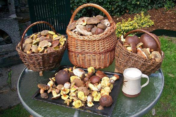 Госдума обсудит правила сбора грибов и ягод. 382720.jpeg