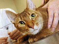 Бездомную 19-килограммовую кошку посадили на диету. 270722.jpeg
