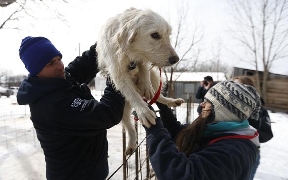 В США 46 собак спасли от хозяина-живодера. собаки, защитники животных