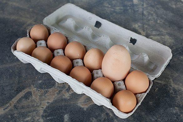 Форма птичьих яиц связана соспособностью кполету