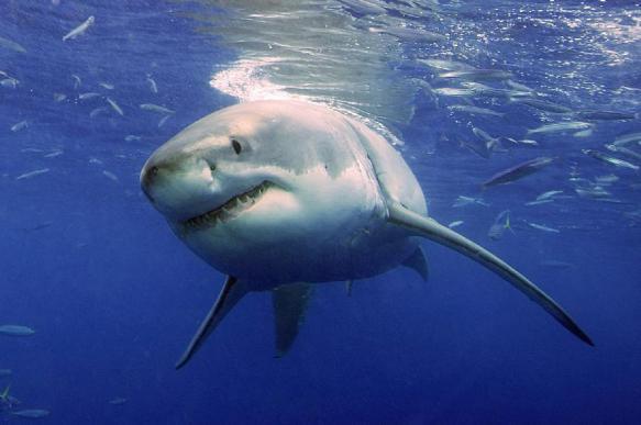 Китаянка выжила после падения в аквариум к акулам. 393725.jpeg