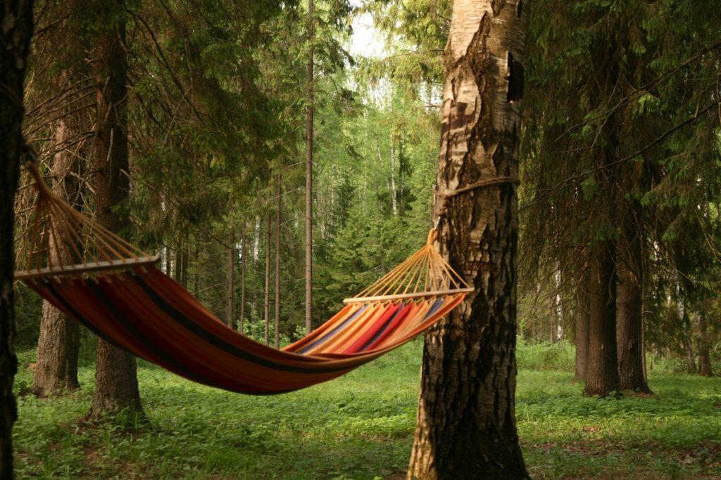 Зеленый отдых: восемь причин провести выходные на природе. Отдых на природе