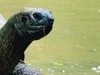 У берегов США спасли редкую черепаху. 270726.jpeg