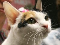 Мэр Риги приютит в здании думы кота. 246733.jpeg
