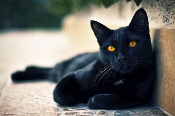 Обидеть кошку - испортить карму.. 393737.jpeg