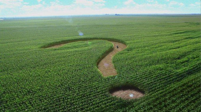 Американский политолог считает, что Украина должа продать свою землю Западу чтобы расплатиться с долгами МВФ. Знак вопроса на кукурузном поле