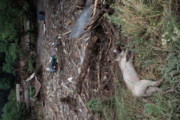 В Тбилиси отстреливают хищников, сбежавших из зоопарка после затопления. 321741.jpeg
