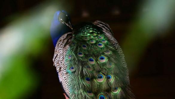 Как знакомятся птицы, выбирая себе пару?. 393741.jpeg