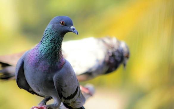В Тайланде за кормление голубей могут посадить в тюрьму. 393743.jpeg
