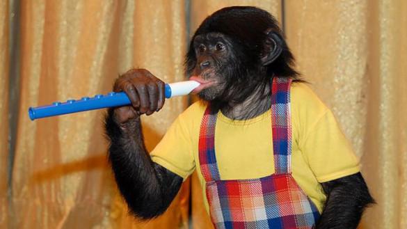 В Чехии хотят запретить диких животных в цирках. 394743.jpeg