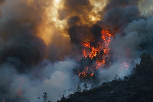 В Приморье лесные пожары уничтожили 1,3 тыс. га леса