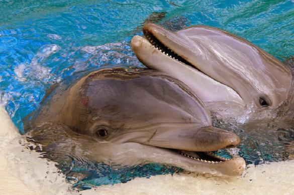 Киты идельфины живут вполне «человеческой» жизнью благодрая своему большому мозгу