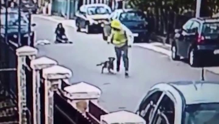 Бездомный пес спас женщину от нападения грабителя. Бездомный пес спас женщину от нападения грабителя