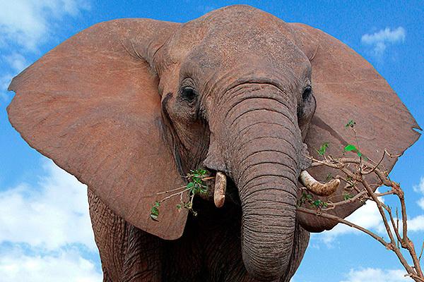 Глоток свободы: из цирка в Кемерово сбежали слоны. 393749.jpeg