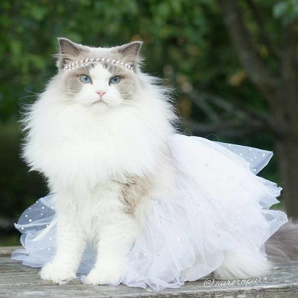 12 интересных фактов из жизни кошек. 405750.jpeg