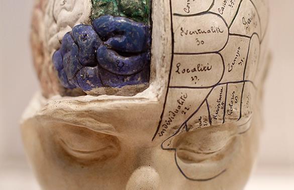 Ученые: забывчивость удаляет из мозга ненужную информацию