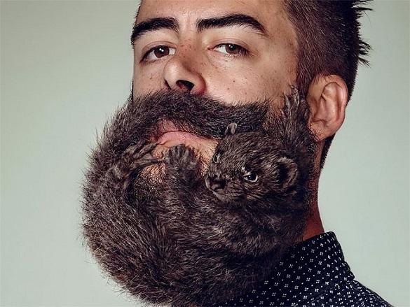 В мужской бороде обитают стафилококки и кишечные бактерии. 399752.jpeg
