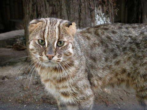 12 интересных фактов из жизни кошек. 405752.jpeg