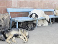 Изгнать бродячих собак из подземки не получается