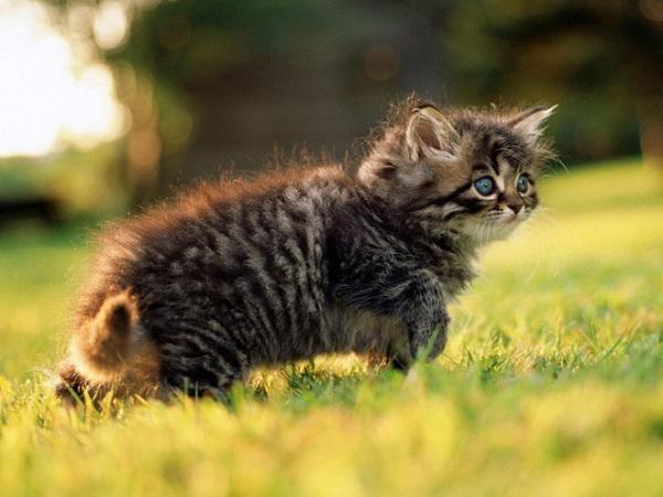 12 интересных фактов из жизни кошек. Котенок на прогулке