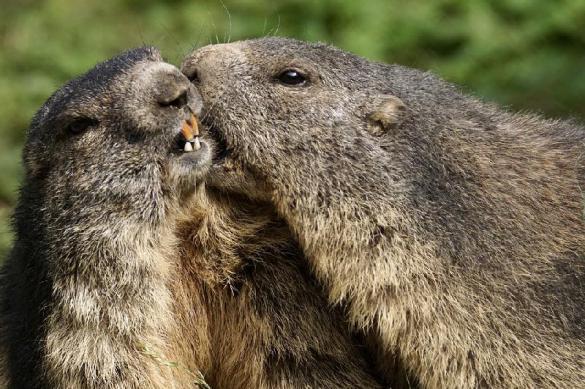 Московский зоопарк планирует открыть хоспис для домашних питомцев