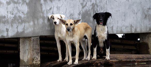 Грудное вскармливание женщинами домашних животных - новая мода в США. 316758.jpeg