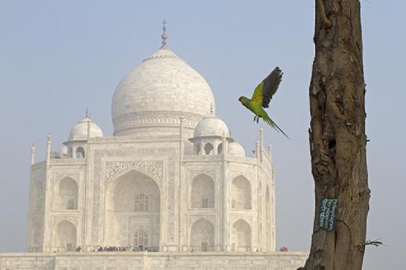 Индийское чудо света Тадж Махал может исчезнуть навсегда. 389758.jpeg