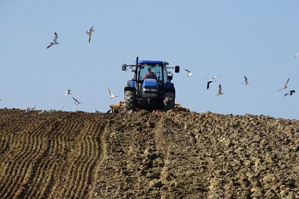 Матушка-земля: учимся определять состав почвы на участке. 395758.jpeg