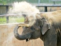 Польскому слону-гею выписали слониху из Голландии