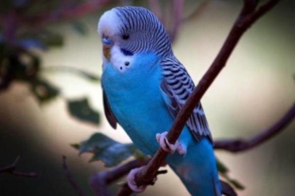 Попугай – птица гордая. 395761.jpeg
