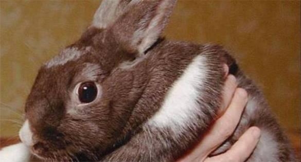 Европеец заживо испек кролика в микроволновке. 300764.jpeg