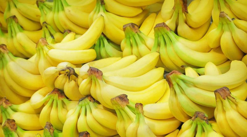 Человечество может остаться без бананов. Человечество может остаться без бананов